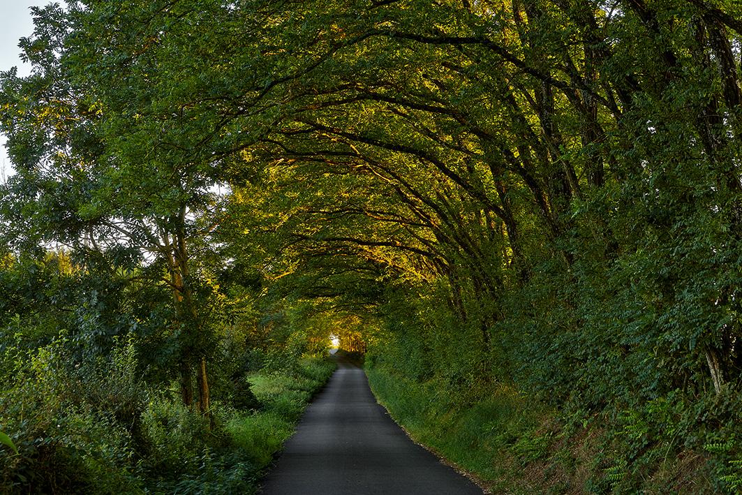 Tunnel d'arbres entre Neulise et Saint-Symphorien