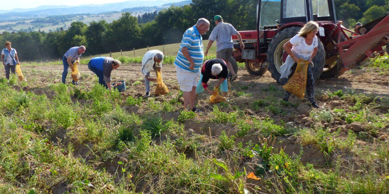 9ème fête des pommes de terre sous le soleil