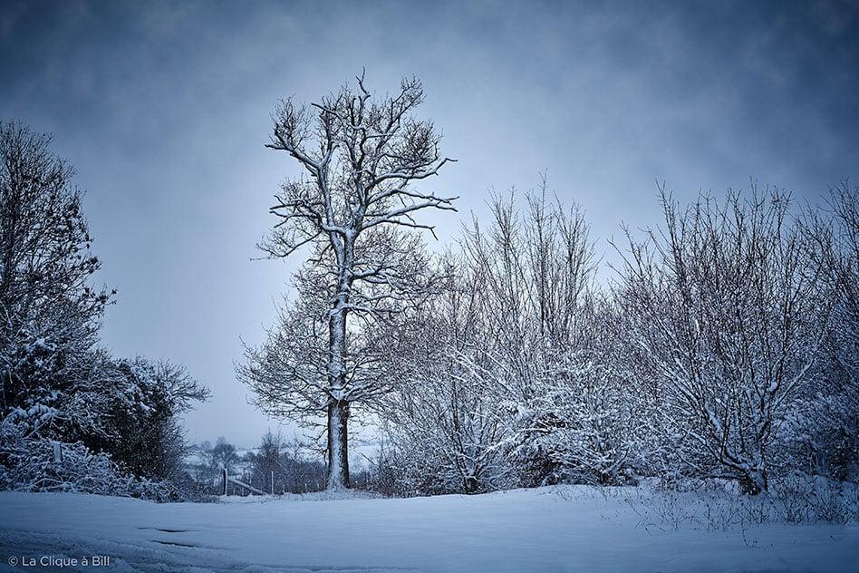 Bosquet sous la neige aux Ratis à Neulise. Photo : La Clique à Bill
