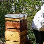 Indemnisation des pertes de récoltes en miel 2019