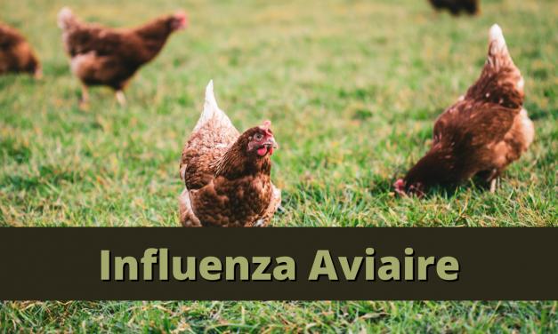 Influenza aviaire hautement pathogène : La Loire passe au niveau de risque élevé