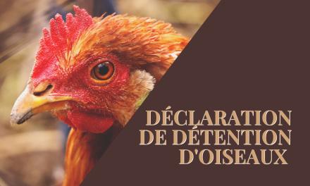 Déclaration de détention d'oiseaux