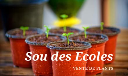 Vente de plants du Sou des Écoles